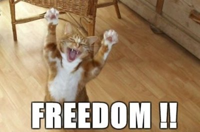 lolcat-freedom
